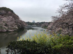 2019年お花見🌸
